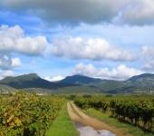 MONTPELLIER WINE TOURS © MONTPELLIER WINE TOURS